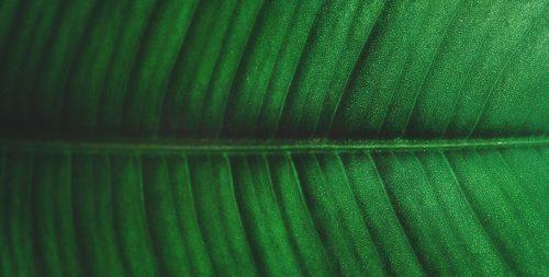 Eco - Print Designs