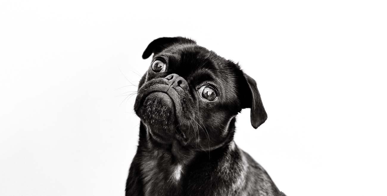 Pets - Print Designs